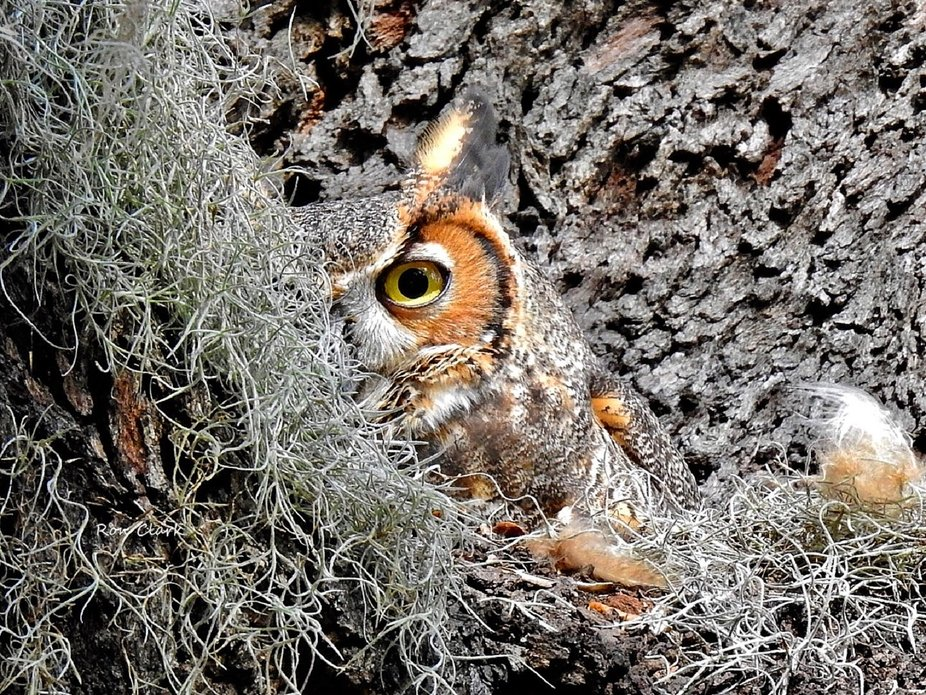 Peering out from it's nest.