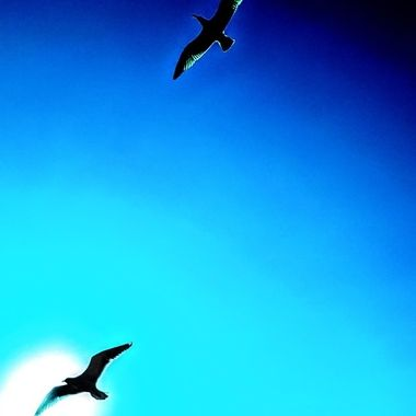 Blue sky Dive
