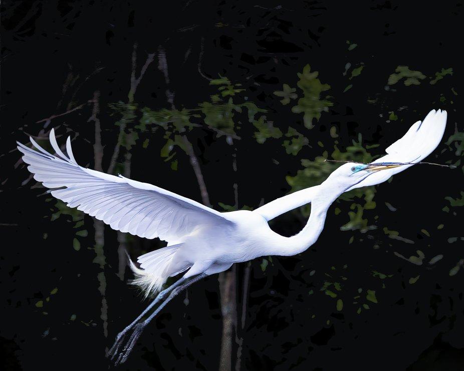 great white in flight final