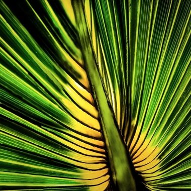 Through the Palm Frond NW