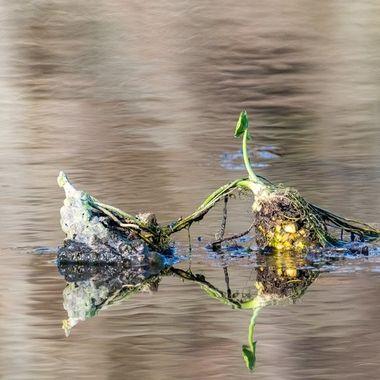Pond stuff  DSC_1090-2