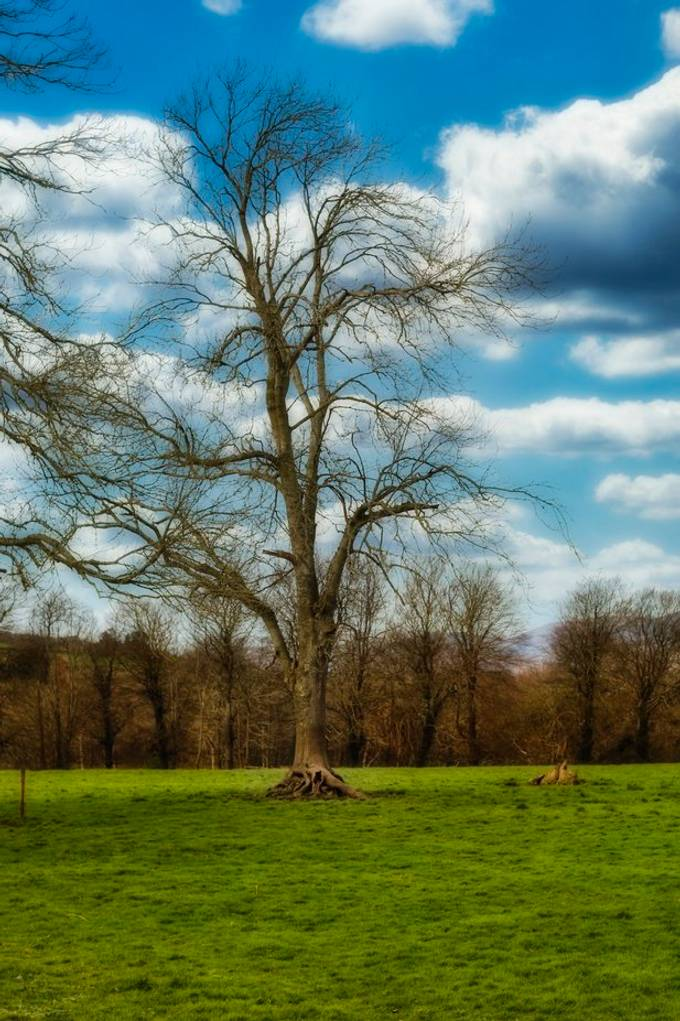 Scenic view of tree and blue skies against white clouds
