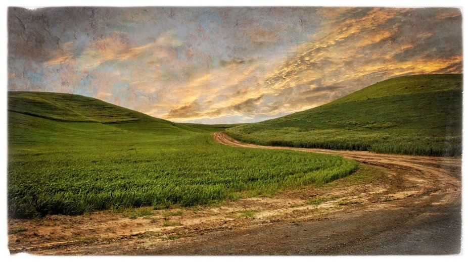 A farm road through the green fields of the Palouse in Eastern Washington. A blending of two images with textures to create a more artistic look and feel.