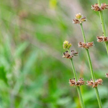 a macro flower stem photo taken in a garden in Marbella, Spain