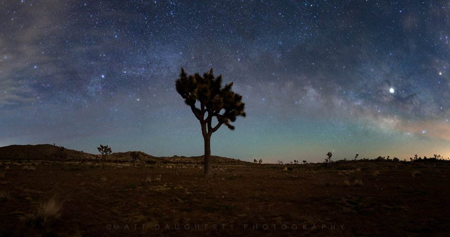 The spectacular dark skies of Joshua Tree National Park