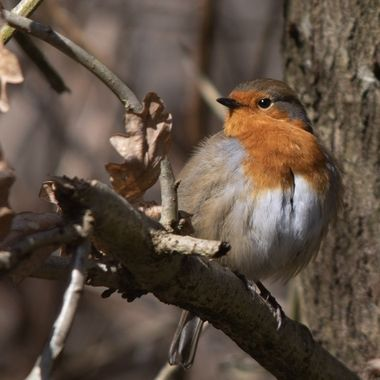 Taken in Crane Park West London R