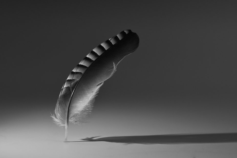 Simple monochrome images of beautiful found natural objects.