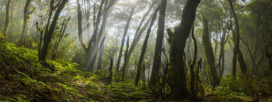 Fog Forest, La Gomera