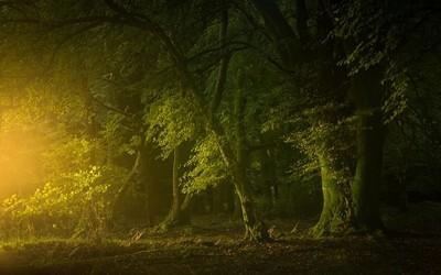 Dawn in the woodland