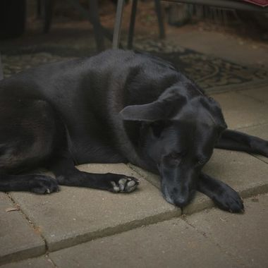 Shelby having a nice little nap on the patio.