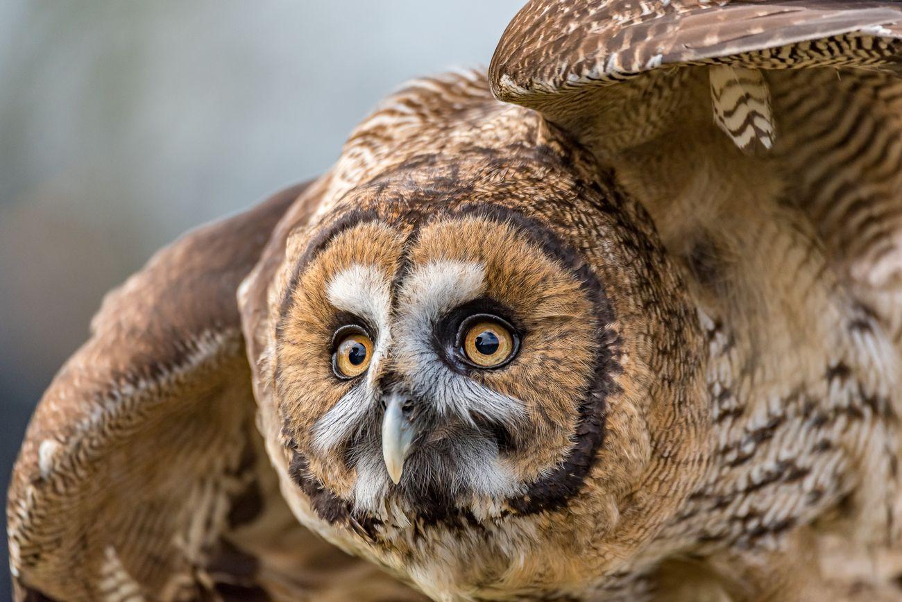 Flying Animals Photo Contest Winner