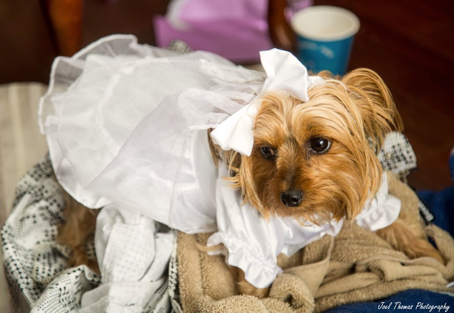 Morning of wedding day.  Though Lily had a dress ready to go, she was not part of the day.