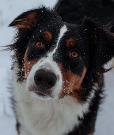 A Dog's Kind Eyes