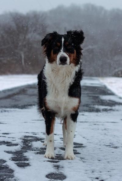Wanderlust Dog