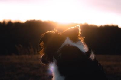 Sunset Bestfriend