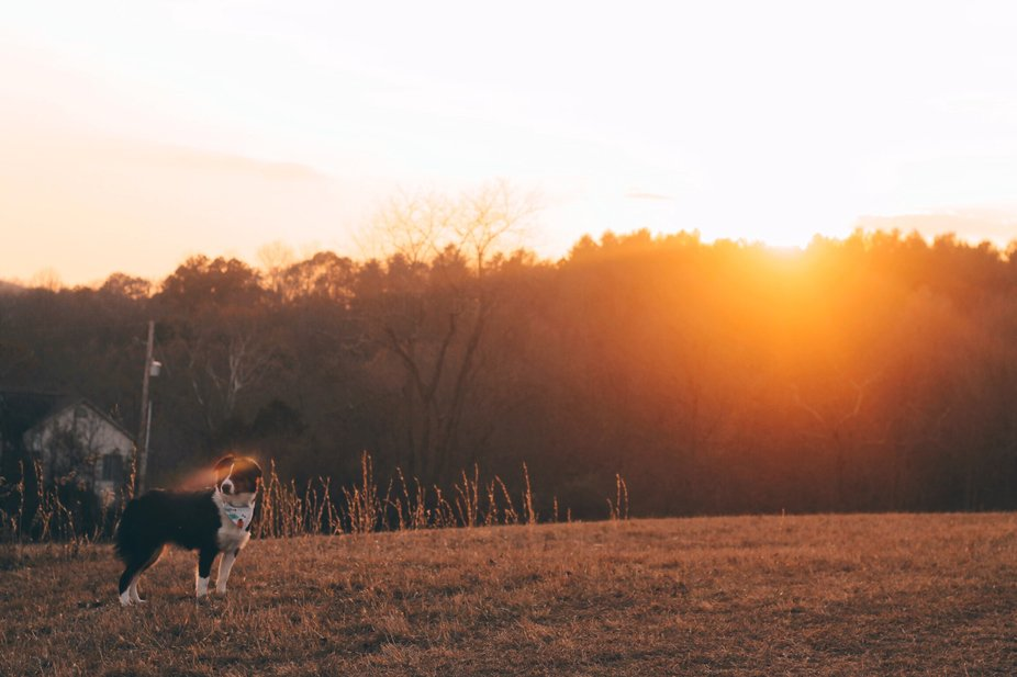 Sharing a gorgeous sunset with my beautiful dog, I think this photo captures country living almos...