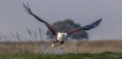 Eagle Splash