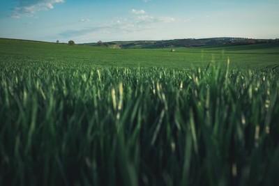 Inside the field