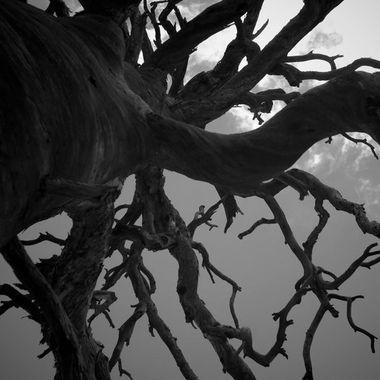 Tree of Lightning