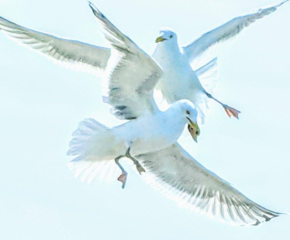 Sweet Harmony In Flight