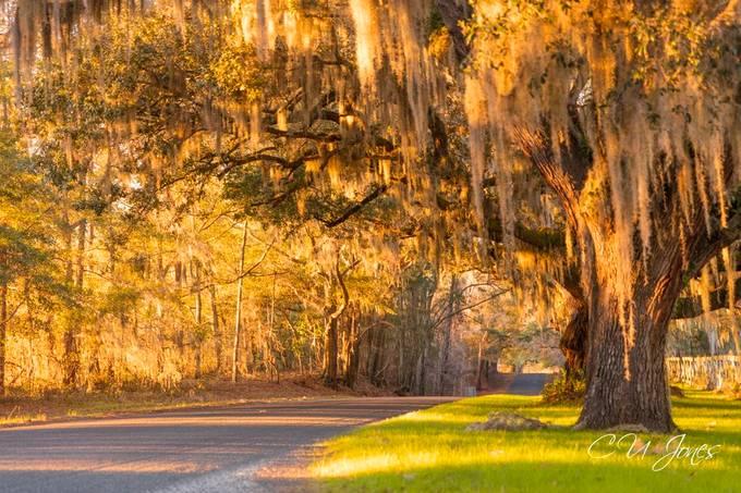 Backroading-South Carolina