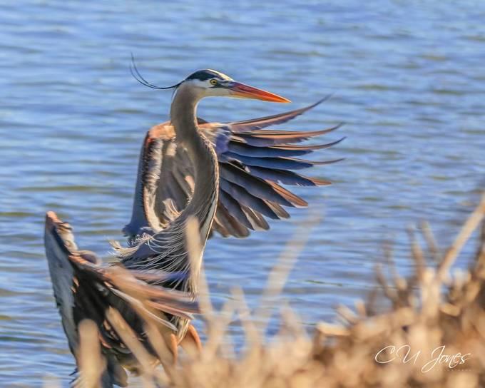Birds at Huntington Bach Park