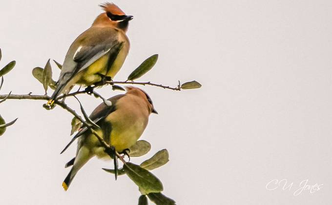 Birds of Cypress Gardens