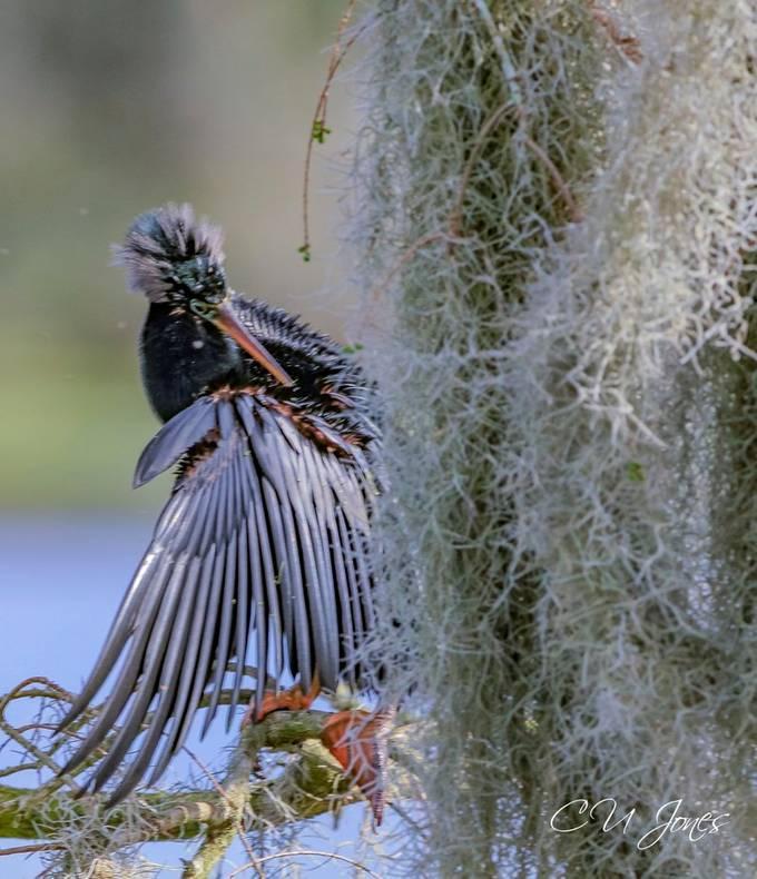 Visit to Magnolia Plantation Swamp and Zoo