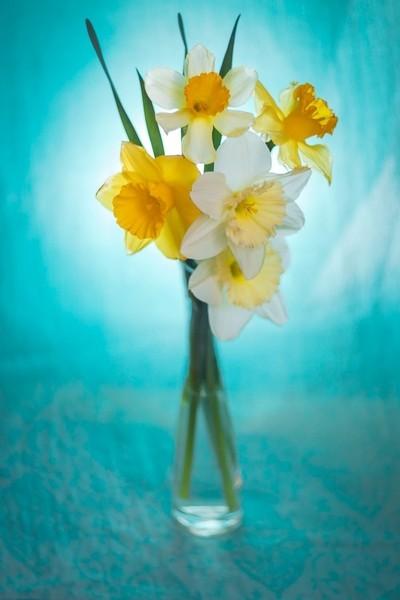 Romantic daffodils