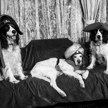 Dogs in Hats.