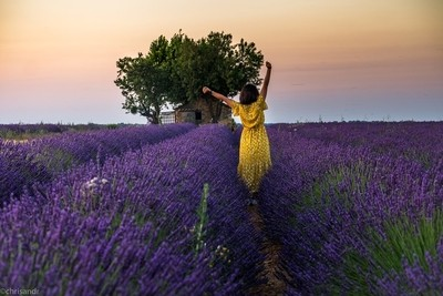 embracing the morning sun and the fragrance of the lavenders