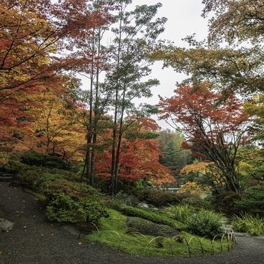 Last fall at the Japanese gardens