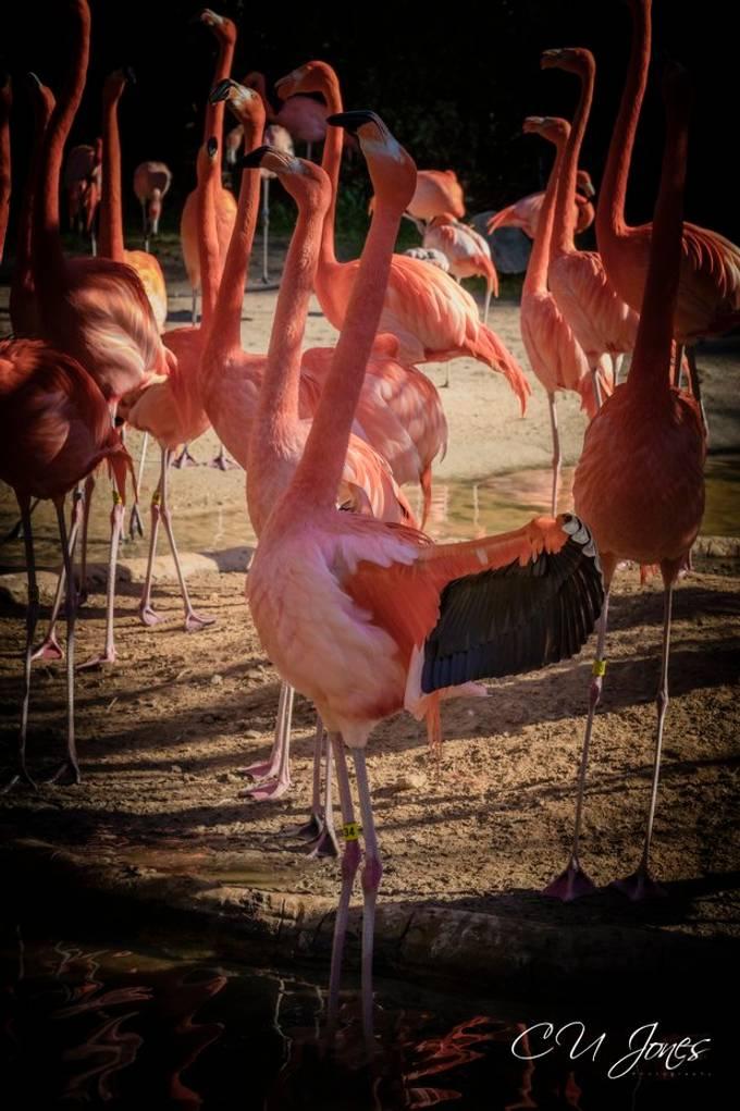 Riverbank Zoo & Gardens