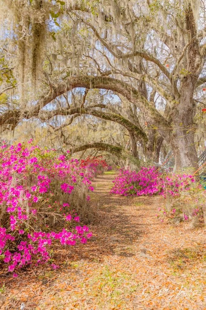 Magnolia Plantations & Gardens- March 2020
