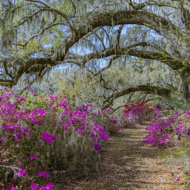 Magnolia Plantations & Gardens- March 2020