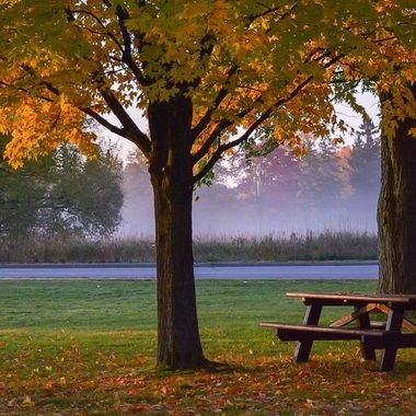 A very crisp, cold, fall morning with the sun just rising.   There is a mist above the grasses, and a pink hue from the golden hour. In the front of the photo there are 2 beautiful maples asking to be photographed, and a picnic table waiting for a family to enjoy the day