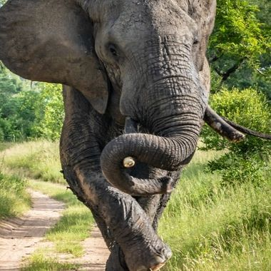 As I snapped these photos of an Elephant rushing toward us to warn us not to come closer I realized how it looked like he was dancing.