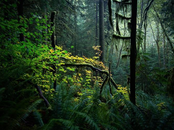 Morning Serenity by jameswestbury - Capture Stillness Photo Contest