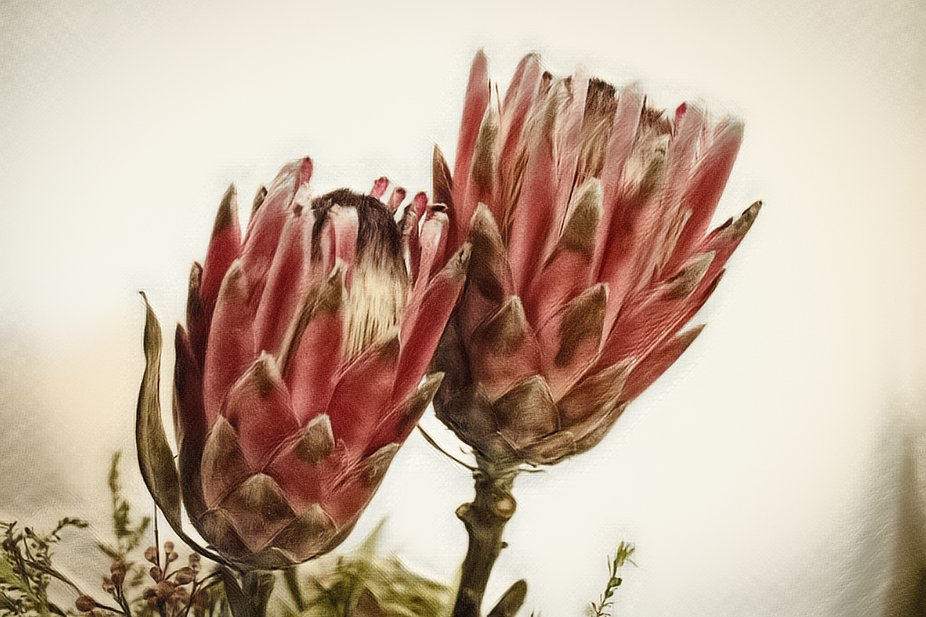 I love dried flowers. These were some I dried which kept their color for a long time. Protea is t...