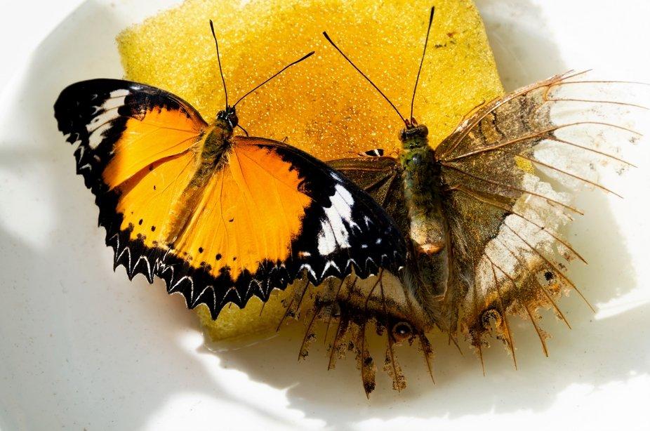 Butterfly 5Butterflies