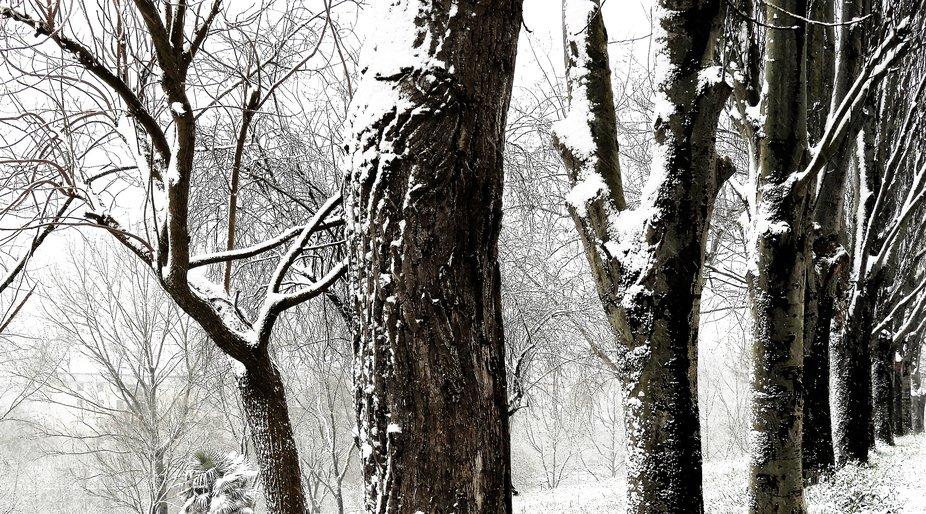 Grupo de arboles de un parque publico, atacados por inusual nevada