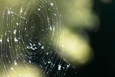 Fuzzy Web