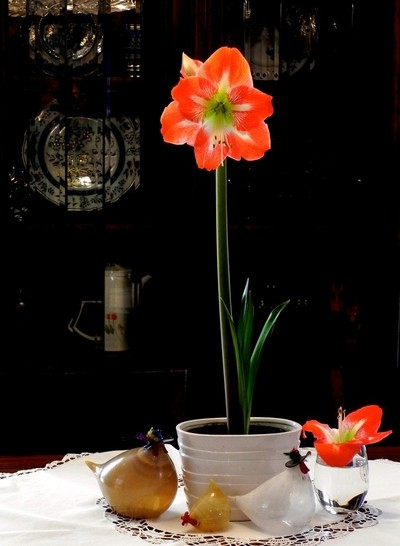 Amaryllis Bloom and Glass Blown Chickens