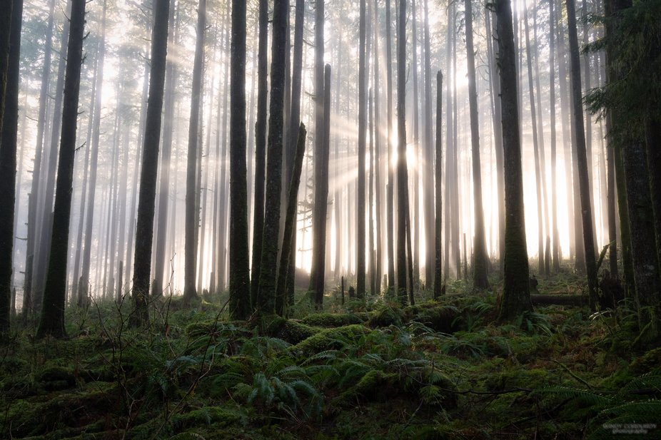 Just as the fog starts to thin a bit, the sun peaks through, creating beautiful light rays. Can�...