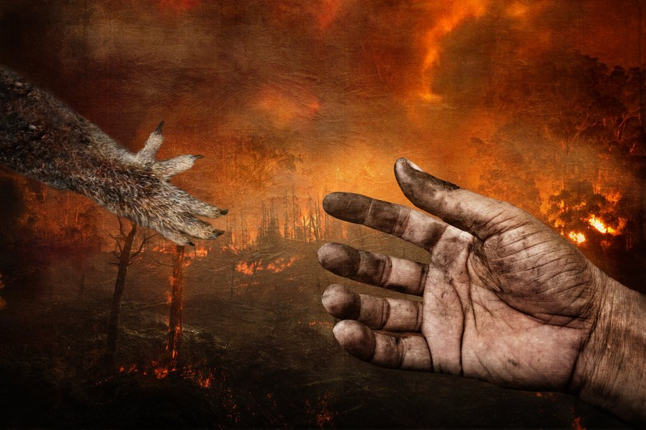 This is a composite image that I made to bring attention to the devastating bush fires in Austral...