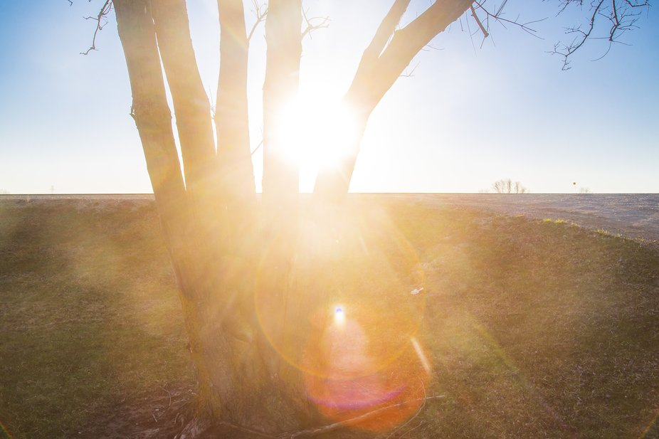 A beautiful shot of the sun through an opening in a tree.
