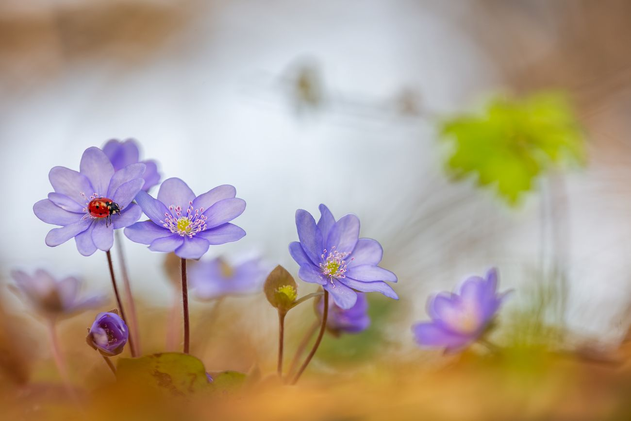 3 Tips To Take Good Photos Of Flowers