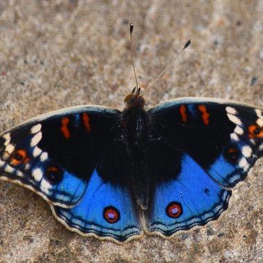 Butterfly observed in garden in Bethlehem
