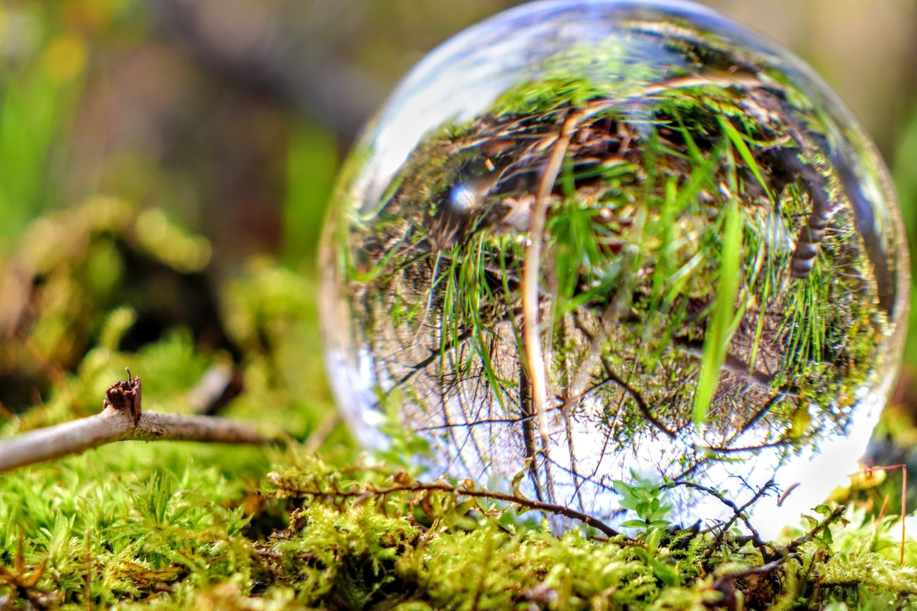 Glass Orb in moss