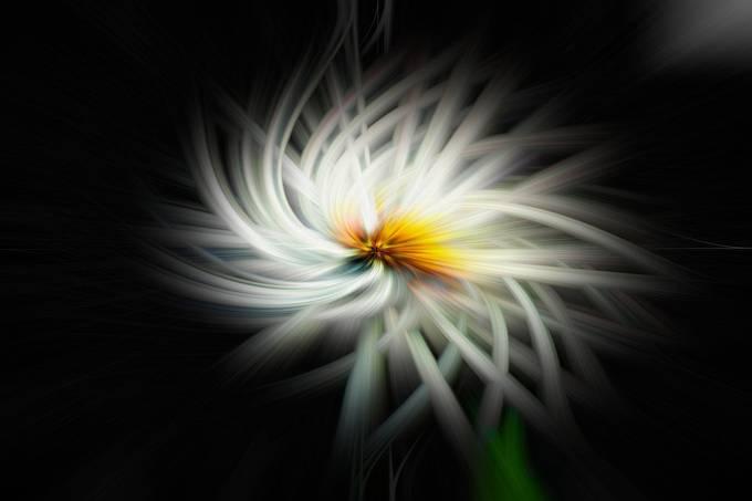 flower twirling wallpaper